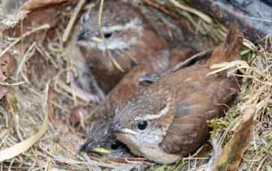 Five Little Birdies in the Grill