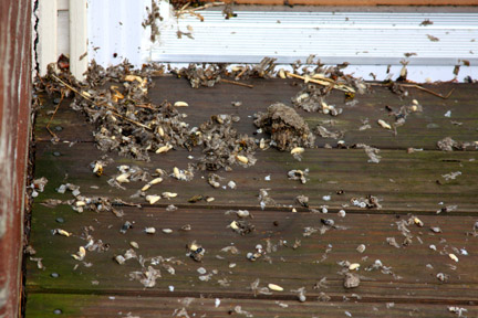 Decimated Wasp's Nest