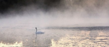 Lone Goose on a Foggy Pond