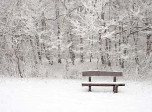 Snow Falling on Park Bench