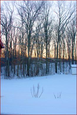 Snow - February 22, 2011